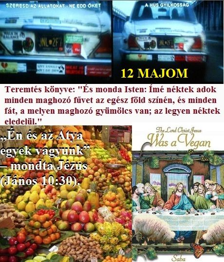 http://napcsillag.hupont.hu/felhasznalok_uj/2/1/212921/kepfeltoltes/hus_es_a_12_majom_kepek.jpg?50007131